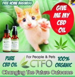 CBD Oil for Cats